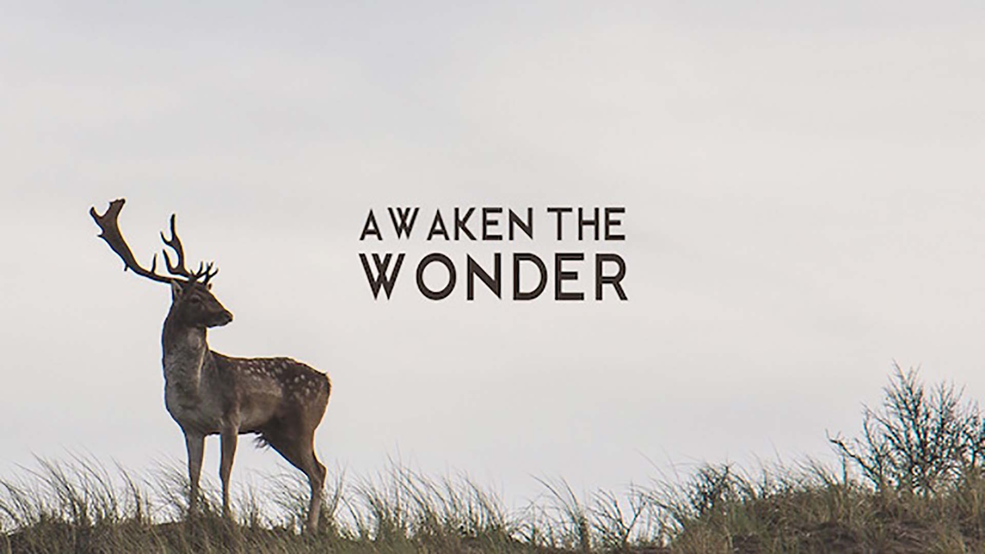 Awaken The Wonder
